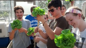 Billy Daly with members of the Ag Co-op harvesting hydroponic lettuce (Photo: Todd Troester)