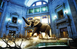 Smithsonian Museums in Washington DC. (Photos: Google Images)